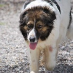 Herzwurmhund_2