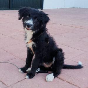 Lana, Mischling, 50 cm, 01.06.2021, Spanien